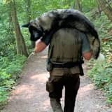 HERO: Park Ranger Carries Dehydrated Dog To Safety Down Treacherous Water Gap Mountain
