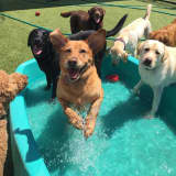 Mount Kisco's Doggie Daycare Celebrates Five Years Of A  'Ruff' Life