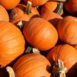 Ho-Ho-Kus Unplugged Re-Schedules Pumpkinfest 2016 For October 23