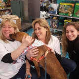 Wappingers Woman Devotes Her Life To Helping Animals