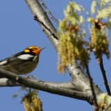 'Friends Of Garrett Mountain' Organize Bird Walk In Woodland Park