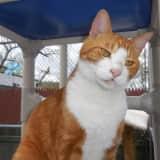 Putnam Humane Society Highlights Homer The Cat