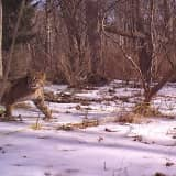 Hudson Valley Man Gets Photo Of Bobcat In His Backyard