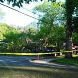 Man, 80, Killed When Tree Falls On Car In Nyack