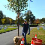 Going Green: Tree Conservancy Leaves Its Mark Around Darien