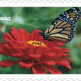 Hudson Valley Photographer Gets Stamp Of Approval From US Postal Service