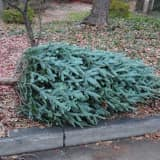 Recycle Your Christmas Trees At Lewisboro Boy Scouts' Fundraiser