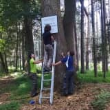 Land Conservancy Volunteers Help Keep Pound Ridge Green And Clean