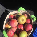 Here's Where To Go For Dutchess County's Best Apple, Pumpkin-Picking