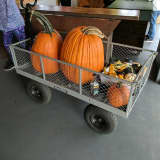 Pick A Pumpkin: Shelton Farms Offers All You Can Carry
