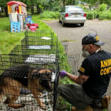 Justice? Franklin Lakes Owner Who Abused German Shepherds 'Walks Away,' Investigator Says