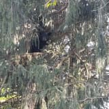 Bear Spotted In PA Suburbs [Photos], Police Say