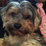 Heartbroken Owner Reunited With Stolen Dog In Westchester