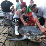 Three Fisherman From Staten Island Reel In 500-Pound Shark
