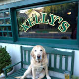NY Times Reviews Kelly's Sea Level In Rye