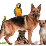 Celebrate Your Pet On National Pet Day, New Canaan
