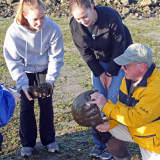 Maritime Aquarium Needs Volunteers To Tag Horseshoe Crabs