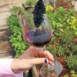Enjoy Wine, Butterflies At Maritime Aquarium Benefit