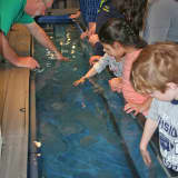 Calling All Fish Fans: Maritime Aquarium Seeking More Volunteers