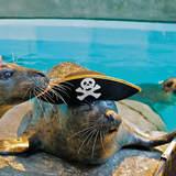 Pirates And Princess Weekend At Norwalk's Maritime Aquarium