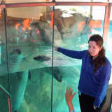 Norwalk's Maritime Aquarium Gets $50,000 Grant From Newman's Own Foundation