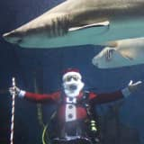 Maritime Aquarium Decks The Halls For Variety Of Holiday Events