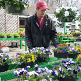 In Show Of Pansies, Ridgewood Nursery Announces It's Spring