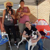 Furry Friends Welcome To Strut At Fair Lawn Pet Walk