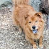 Gracie Is SPCA Pet Of The Week