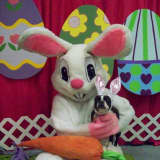 Pet Pictures With Easter Bunny Support Putnam Humane Society