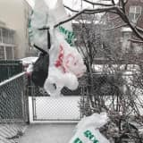 Vote Now: What Do You Think Of Dutchess' Ban On Plastic Bags?