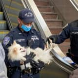 HEROES: Port Authority Responders Rescue Dog Caught At Bottom Of Escalator
