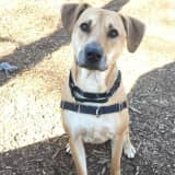 Leon Is SPCA Of Westchester's Pet Of The Week