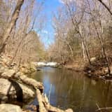 Take A Walk On The Wild Side At Mianus River Gorge In Bedford