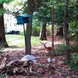 Tarrytown Gardener Says A Fence Is Best Defense Against Deer