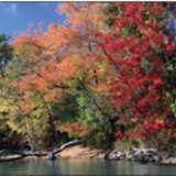 Fall Foliage Season Starts In New York