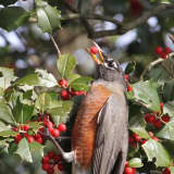 Feeding Hungry Visitors In Your Winter Landscape