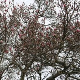 Promise of Spring In Greenwich