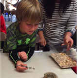 Students Meet Miles The Hedgehog, Learn About Mammals