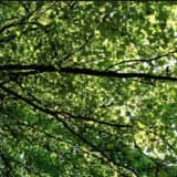 Expert To Talk About Benefits Of Tree Canopies At Monroe Library