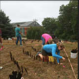 Walk The Labyrinth At Norwalk Community College To Discover Love