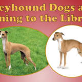 Greyhound Dogs Coming To North Castle Library