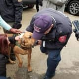 Missing Police Bloodhound Found Healthy, Safe In Danbury