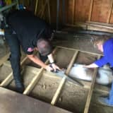 Dog Trapped Under Shed Rescued In Area