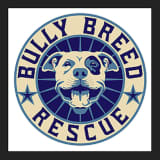 New Canaan-Based Rescue Group Ex-President Faces Animal Cruelty Charges After Five Dogs' Deaths