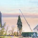 Rockefeller Center Christmas Tree Now Headed From Hudson Valley To NYC