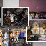 130 Animals Seized In Illegal Union County Puppy Mill