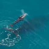 NOAA: Endangered Whale Struck By 2 Vessels Off Jersey Shore