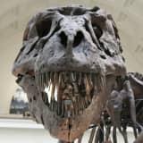 Cow Sharks, Dinosaurs & Prehistoric Crocodiles Coming To $73M NJ Museum