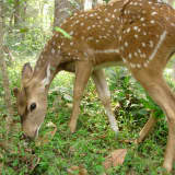Just Say No To Feeding Deer In Little Falls